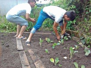 pflanzen holzhofweg